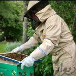کارگاه آموزشی پرورش زنبور عسل و زهرگیری