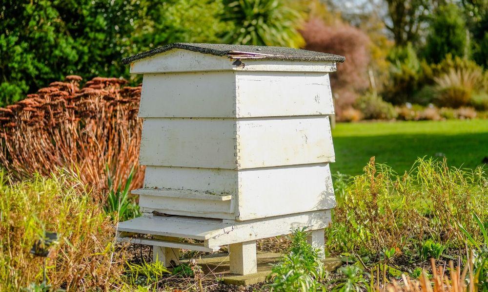 تصویر آگهی زنبورداری باید چگونه باشد؟