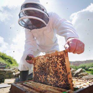 درخواست کارگر تمام وقت برای زنبورستان
