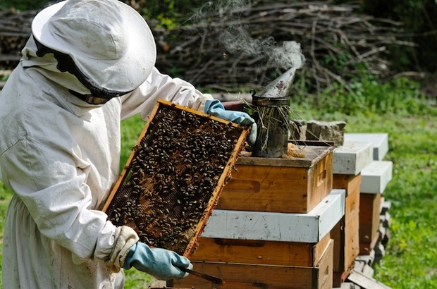 آنچه باید درباره بازاریابی ابزار و لوازم زنبورداری بدانید.