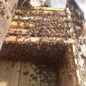 کندوی زنبورعسل