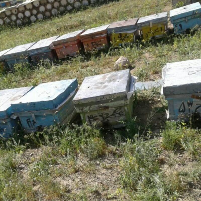 فروش بیست عدد کلنی زنبور عسل