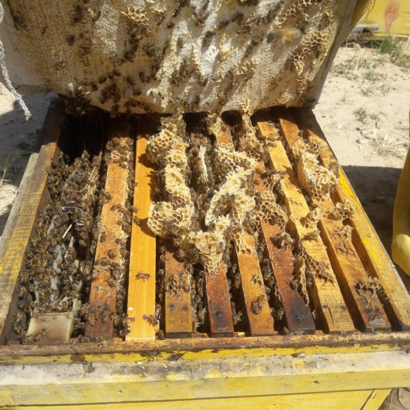فروش زنبور