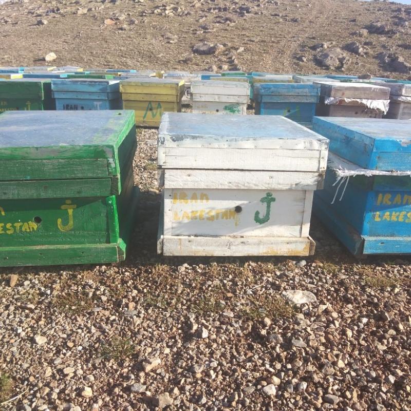 فروش کلونی زنبور