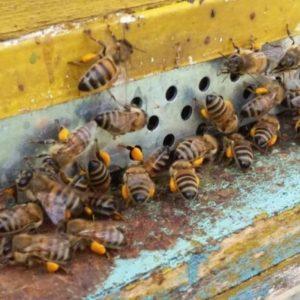 ۸۰ کندو زنبور
