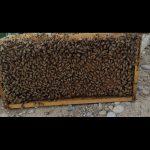 فروش ۷۰ زنبور