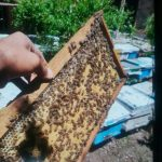 زنبور ده قاب