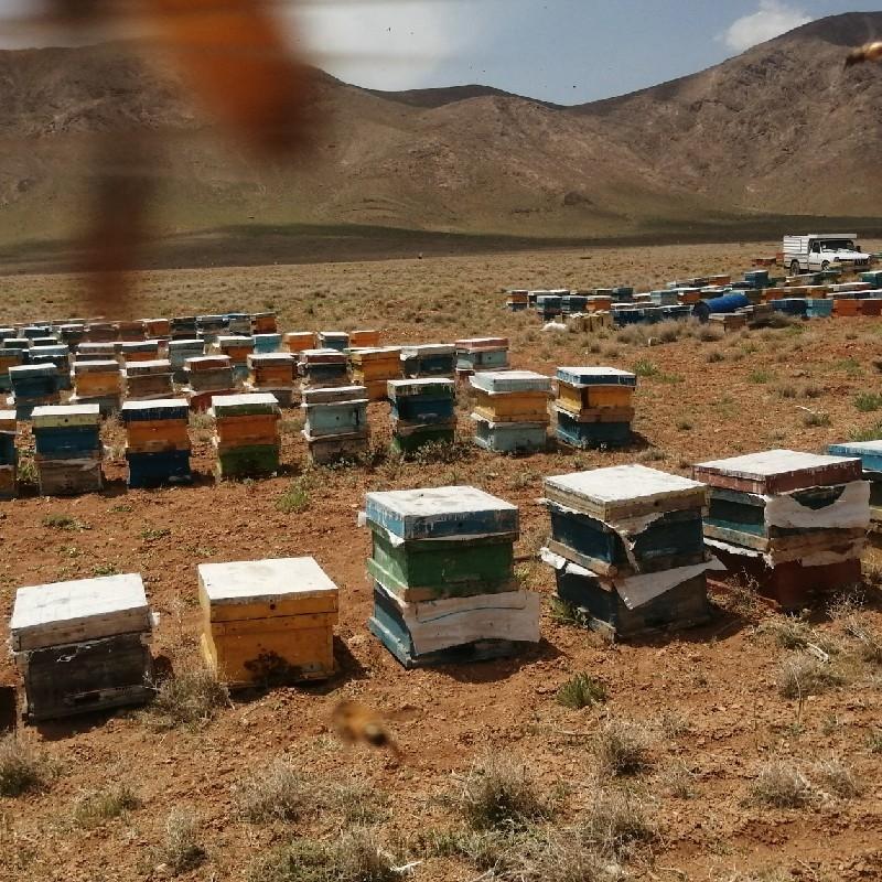 تعداد 300عددکندو زنبور عسل