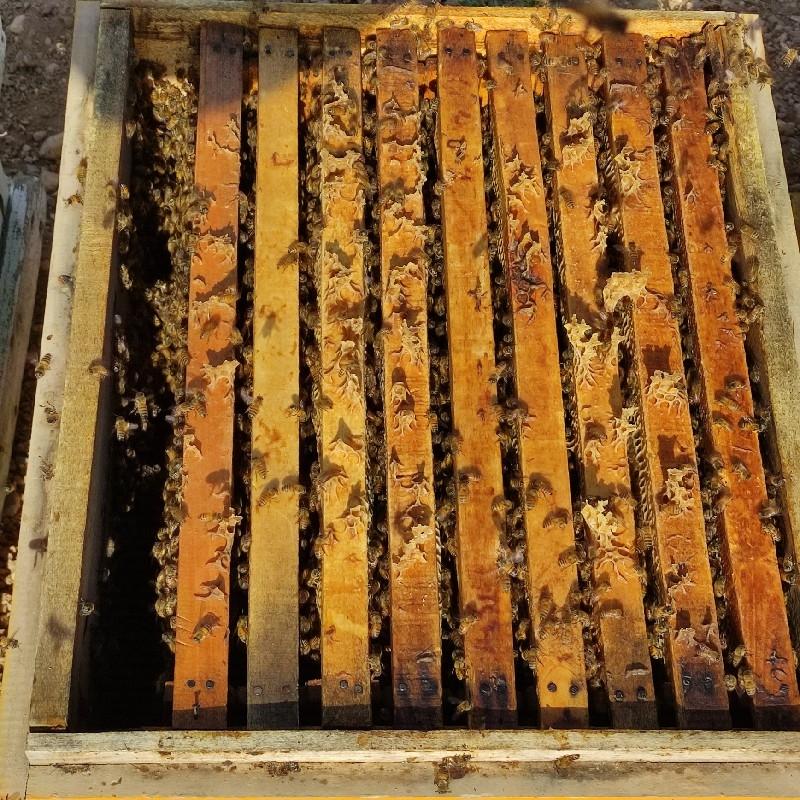 فروش ۲۰۰کلنی زنبورعسل