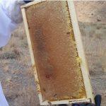 عسل طبیعی آویشن وزول وگون