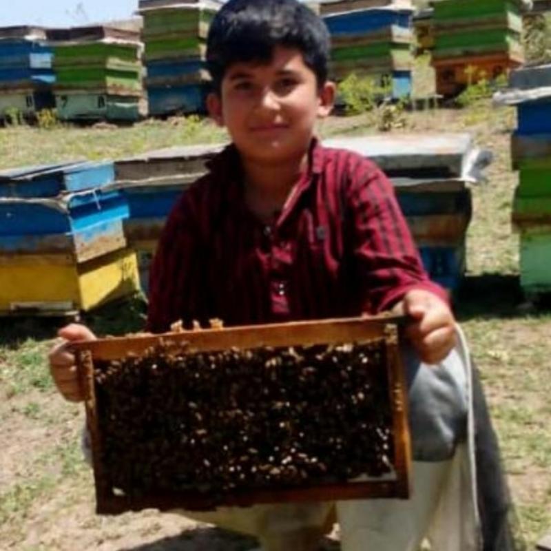 فروش ۱۵۰ کندو زنبور عسل کندو مربع اردبیل