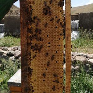 17 کلنی زنبور 8و9 قاب