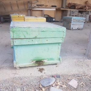 فروش کلنی زنبور عسل