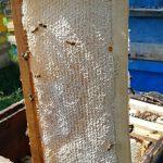 فروش عسل سبلان